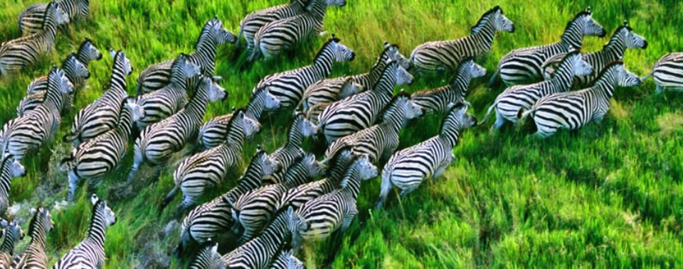 http://www.topafricasafaris.com/wp-content/themes/paradise/timthumb.php?src=http://www.topafricasafaris.com/wp-content/uploads/2015/04/Burches-or-common-zebras-in-Serengeti-Natiobal-Park_files-960x379.jpg&w=80&h=50&zc=1
